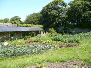 Garden 060713