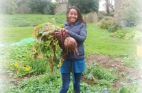 Trefacwn – biggest and best veg in St Davids?